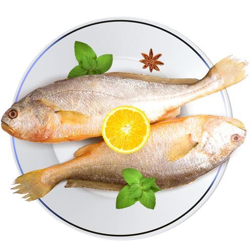 福建宁德大黄花鱼黄鱼 黄花鱼500g/条 新鲜冷冻海鲜水产生鲜 鱼类