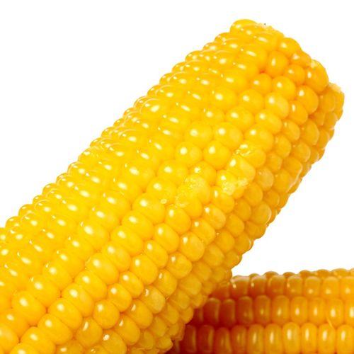 亲耕黄玉米糯玉米非转基因玉米棒真空锁鲜东北粘玉米代餐8支装