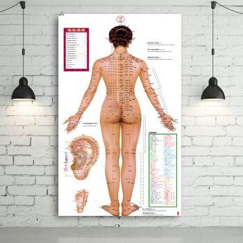 居梦坞 男性女性针灸艾灸人体经络穴位图大挂图足部全身中医养生保健