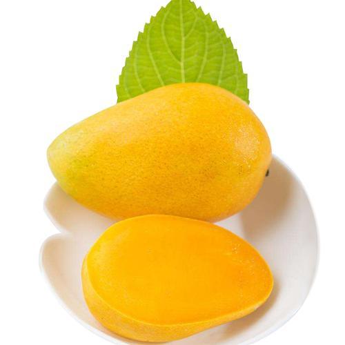 当果萌芒果 树上熟芒果水果新鲜小台农台芒果当季整箱