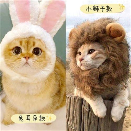 红加菲搞笑装扮英短造型拍照颈圈头饰狮款头套猫咪狗