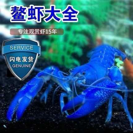鳌虾观赏虾活体宠物虾人工天空蓝魔龙纹虾水族淡水蓝色小龙虾免邮