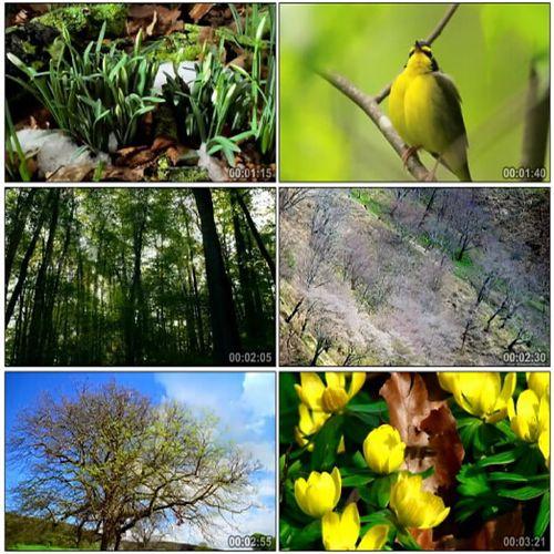 春暖花开鸟语花香自然之春冰雪融化春天景象高清实拍视频素材