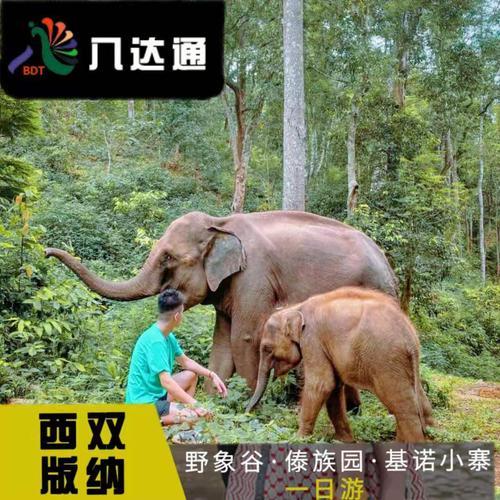 成团云南西双版纳旅游一日游纯玩野象谷中科植物