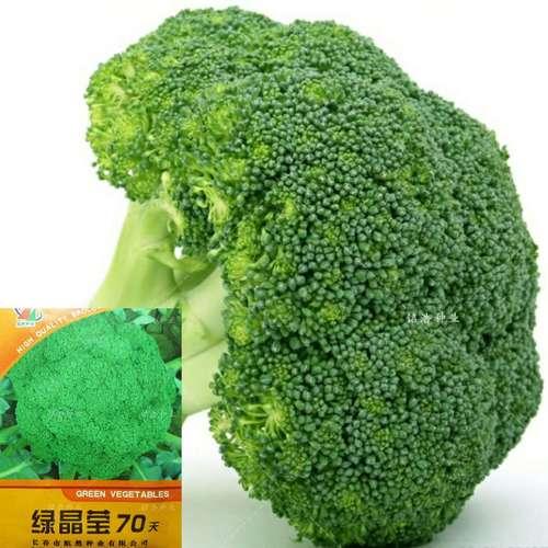 西兰花种子 四季春秋季花菜籽菜园盆栽蔬菜花椰菜西兰