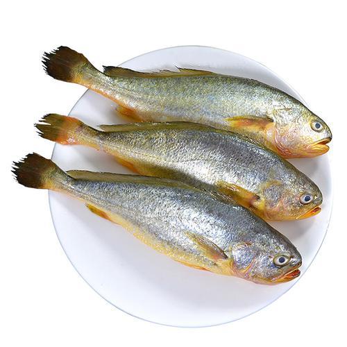 顺丰 青岛新鲜大黄花鱼500g*3条装 冷冻黄鱼冰冻海鱼