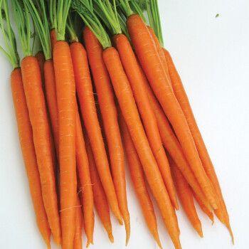【虹越】蔬菜萝卜瓜豆茄子种子 白萝卜胡萝卜水萝卜