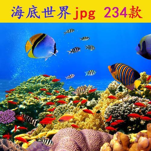 海底世界高清图片jpg素材ps海底生物海洋深海热带鱼类