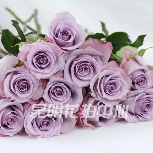 花市精选  海洋之歌玫瑰