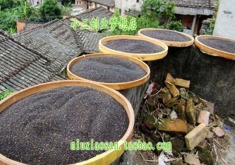 奶奶炒熟黑芝麻山区自种黑芝麻自家种植五谷杂粮 500g